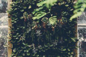 在宅ワークで仕事の効率を上げる一つは観葉植物