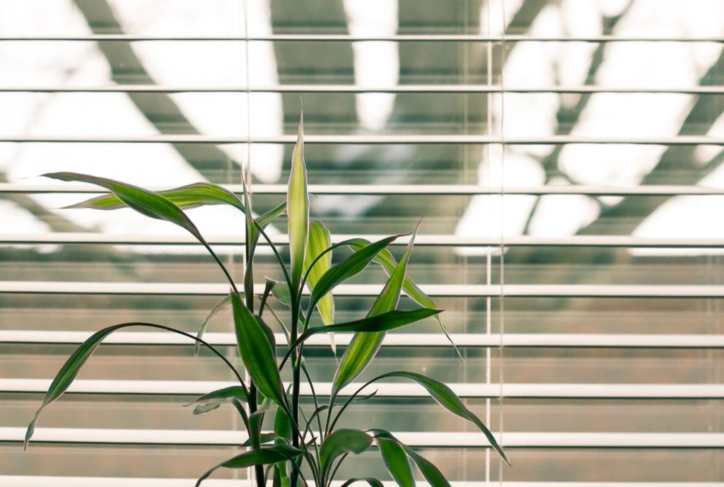 新しい生活様式でソーシャルディスタンスを取るために植物を置く
