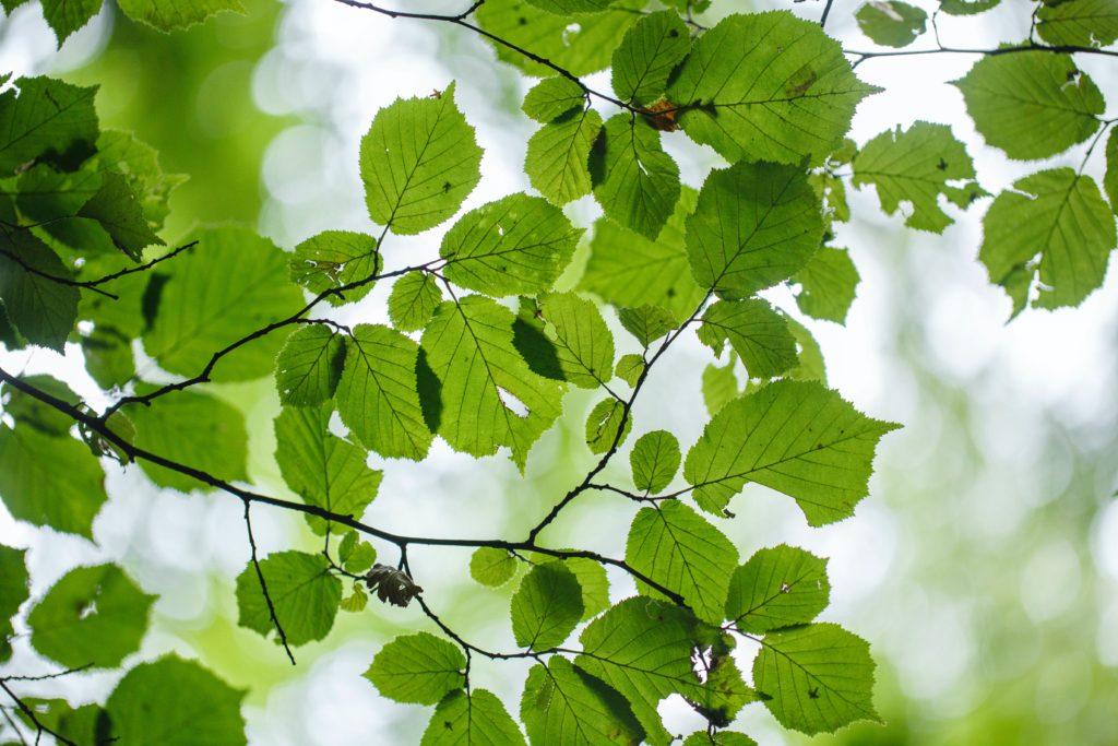 大雨による被害を減らすために植物が役に立つ?