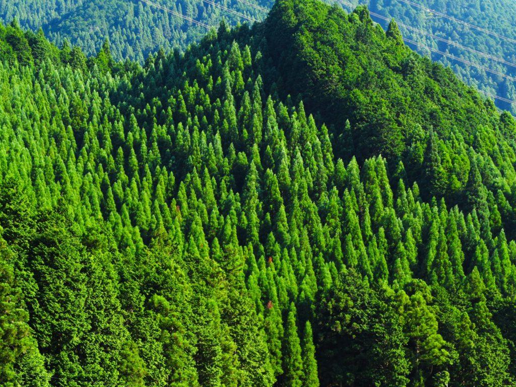 ひのきの森。人工林や自然林がある。