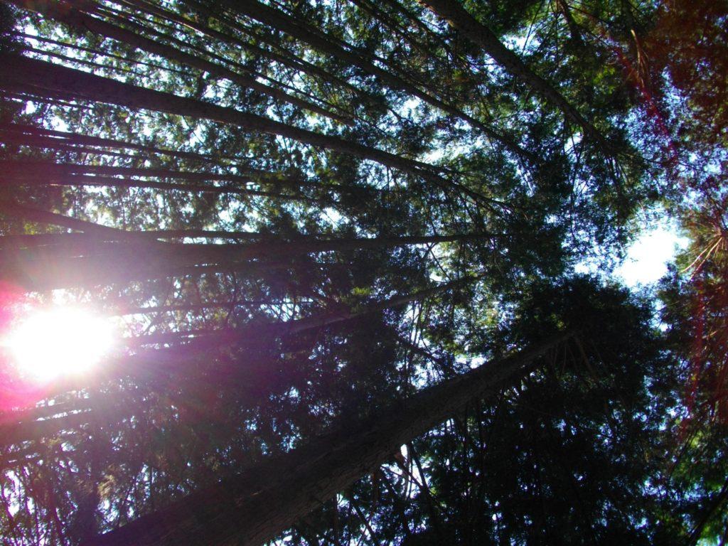 森林 自然光